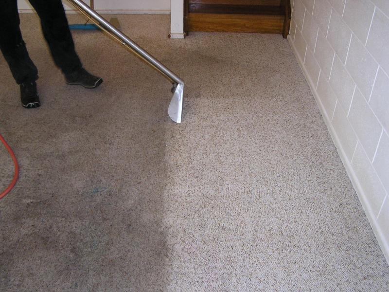 steam carpet cleaning eugene